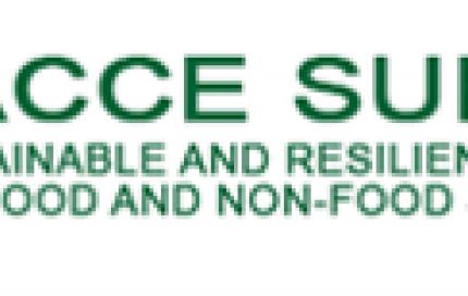 Facce Surplus