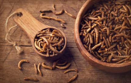 Meelwormen om te eten