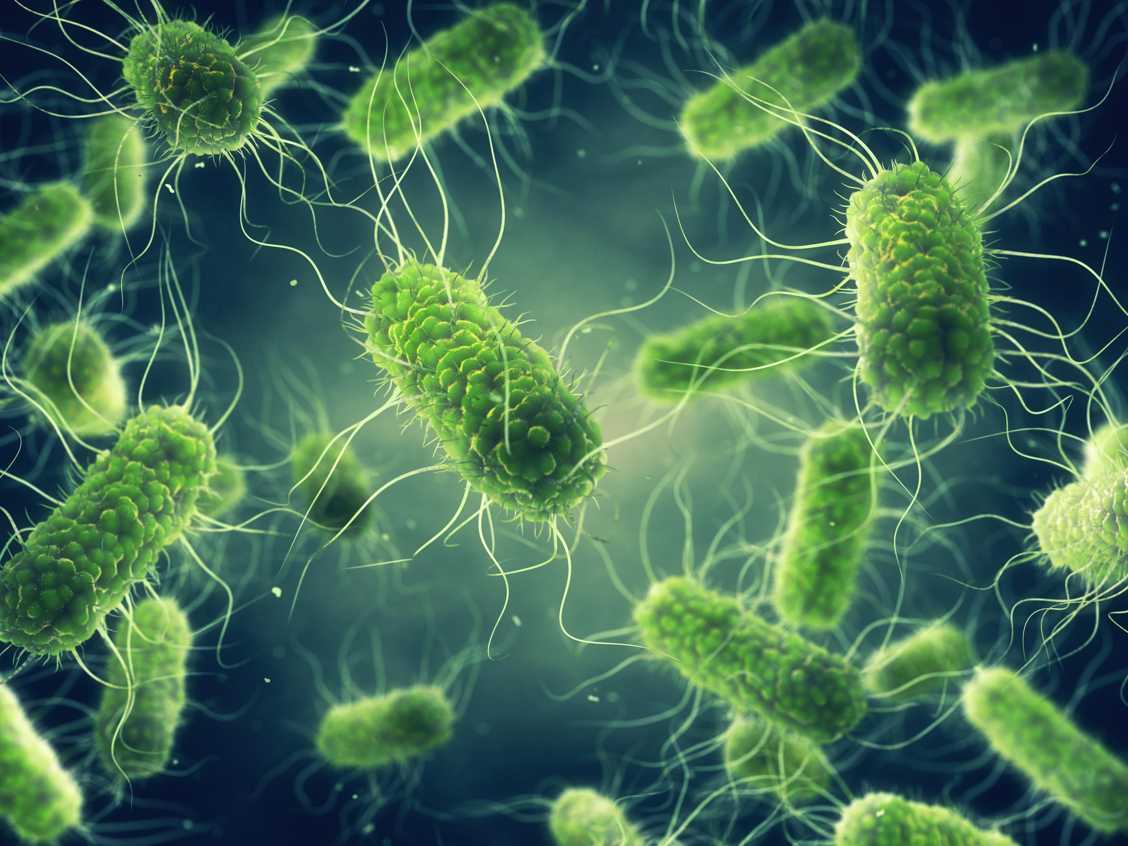 Salmonella bacteriën