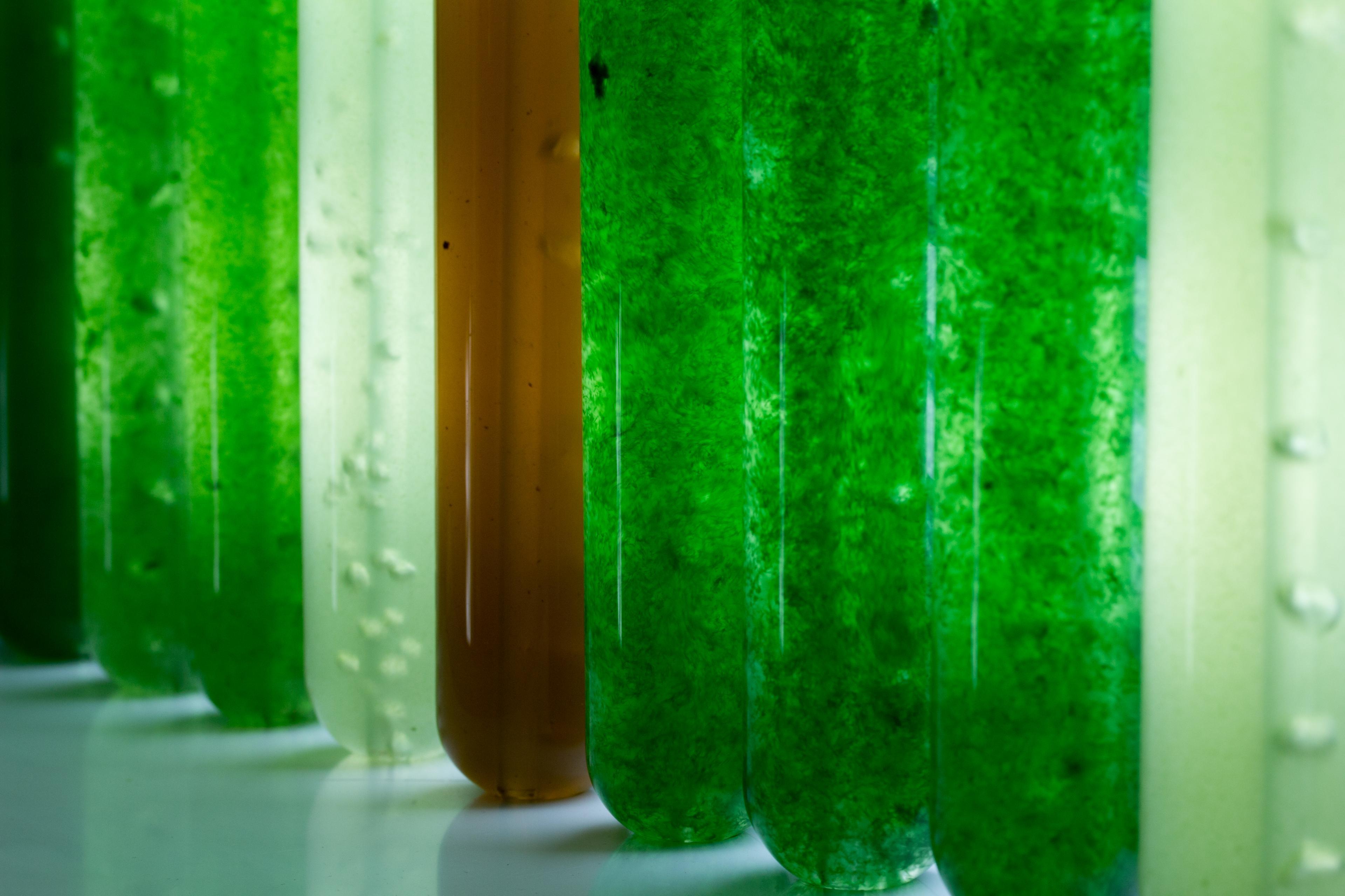 Microalgen in proefbuisjes