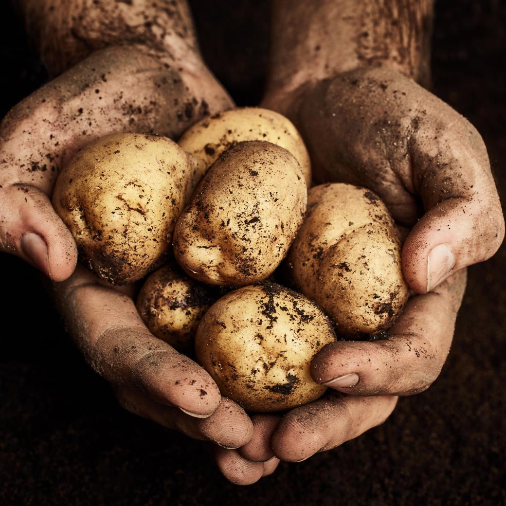 Aardappelen in handen