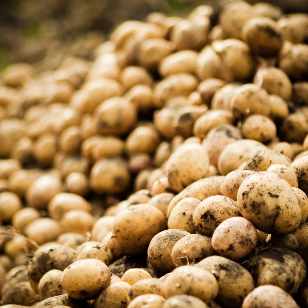 Aardappelen stock